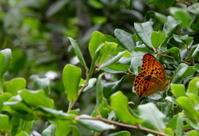 紀南小遠征その3 - 紀州里山の蝶たち