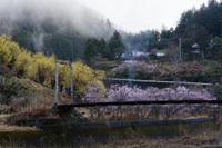 雨上がりの桃源郷 - katsuのヘタッピ風景