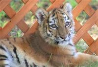 2005年の釧路市動物園の猛獣舎 - 気まぐれZOOⅡ