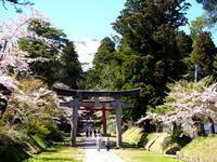 岩木山神社の桜*2020.05.05 - 津軽ジェンヌのcafe日記