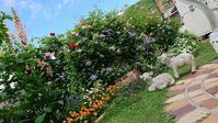 裏庭のバラ咲きだす - Rose & Mary