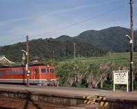 今は昔、讃岐財田駅に藤棚がありけり - 南風・しまんと・剣山 ちょこっと・・・