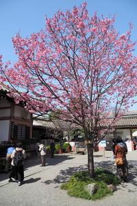 三たび弘法市 - Taro's Photo