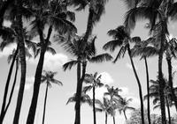 Hawaii - ライカ片手に気ままな自転車人
