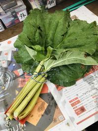 初出荷‼️ - 富士のふもとの農業日誌