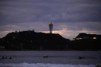 漂うクラゲ - 写真の記憶