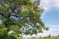 玉ねぎのスライス - 素奈男のお気楽ブログ