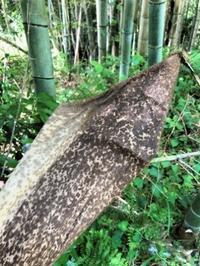 竹林を歩き山で過ごす - 島暮らしのケセラセラ