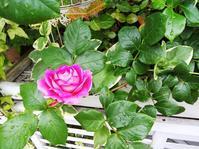 庭の時間が止まったかのような - 小庭の園芸日記