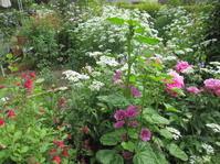 宿根草の庭を目指して - 花の自由旋律