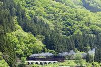 新緑に魅せられ - 蒸気屋が贈る日々の写真-exciteVer