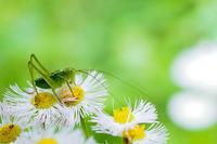 名も無き昆虫も生態系に属している - スポック艦長のPhoto Diary