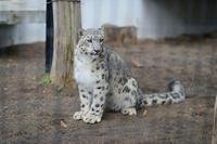 リアン2011.5.1~ - 動物園へ行こう