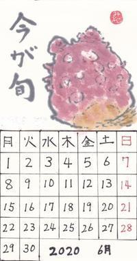 青葉2020年6月ほや - ムッチャンの絵手紙日記