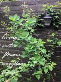 スモークは まだ……… -  Flower and cafe 花空間 ivory (アイボリー)