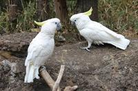 上野動物園バードハウス大図鑑⑦~2F:アオメキバタン - 続々・動物園ありマス。