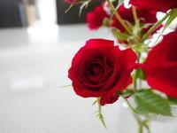 赤薔薇★白薔薇★薔薇薔薇 - 月夜飛行船2