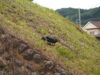 散歩道でキジを見る - 小高い丘の麓から