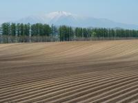 5月下旬は新緑の季節・・畑の畝模様が風景のアクセントに! - 十勝・中札内村「森の中の日記」~café&宿カンタベリー~