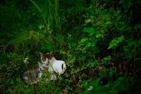 動物のいる庭、映画『秘密の花園』 - 世話要らずの庭