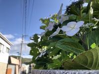 雨の季節が近づくと - つぶやくデジカメ〜東京離島さすらい編