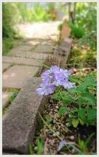 小さな花たち♪ - どんぐりの木の下で……