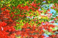 秋を想う - 但馬・写真日和