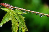 緑雨 - 写心食堂