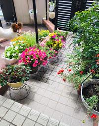 玄関の花💐 - 素敵生活 Low costでも豊かに