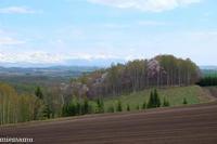 桜と畑、そして山並み~5月の就実の丘 - My favorite ~Diary 3~