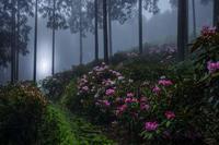 霧の朝 - まっちゃんのPHOTOブログ