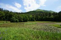 初夏の暑さ・姫逃池 - じじ & ばば の Photo blog