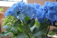 紫陽花記念日 - 一瞬をみつめて