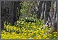 春の旬感4 - 好い加減に過ごす2