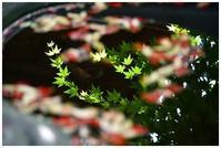 手水鉢の新緑 -  one's  heart