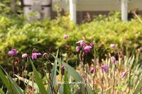 朝日に輝く花壇の花は? - 一場の写真 / 足立区リフォーム館・頑張る会社ブログ