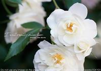 スターダム STARDOM 木村花の急逝に思う - さいとうおりのお気に入りはカメラで。
