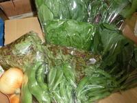 自然栽培の野菜 - 健康グルメ協会