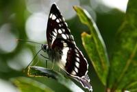 小満蚕起食桑 - 紀州里山の蝶たち
