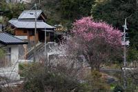 もうひとつの桃源郷 - katsuのヘタッピ風景