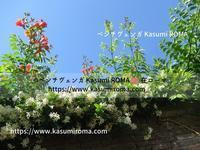 """初夏のローマ♪"""" ~ コロッセオ・周辺 ~ - 「ROMA」在旅写ライターKasumiの 最新!ローマ ふぉとぶろぐ♪"""
