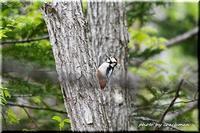 ふれあいの森で探鳥(3) - 北海道photo一撮り旅