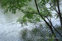 買い出しついでの寄り道散歩写真 - カメラマンイザワの拝啓/撮らせて頂きます!