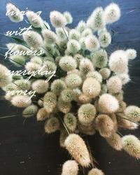 5月25日 -  Flower and cafe 花空間 ivory (アイボリー)
