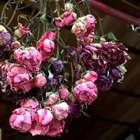 薔薇のドライができました~「とっても可愛く上手にできまして凄く嬉しい!」編 - ドライフラワーギャラリー⁂ふくことカフェ