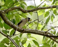 林道散策中にいろいろと・・・ - 一期一会の野鳥たち