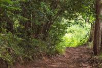 里山を歩く - デジカメ写真集