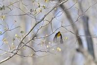 開花までもう少し。~今週のウトナイ湖 - やぁやぁ。