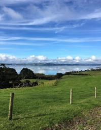 雨の合間のガーデニング/ Planting Between The Rains - アメリカからニュージーランドへ