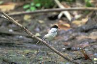 初夏の森で - Granpa ToshiのEOS的写真生活